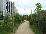 forêt linéaire