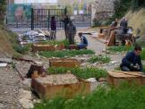 jardin partagé sur les parcelles libérées en attente des travaux de construction